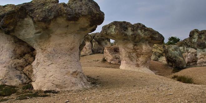 Красивите каменни гъби