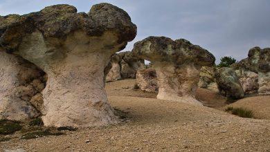 Photo of Красивите каменни гъби
