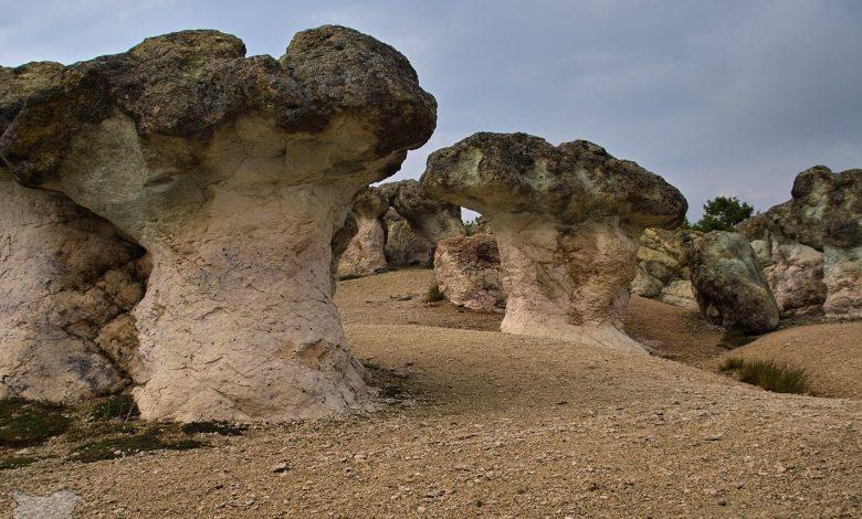 Природен феномен Каменните гъби